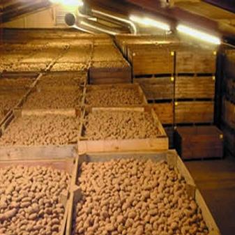 Хранение картошки обработка озоном