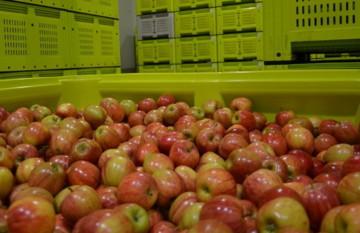 Терміни зберігання овочів і фруктів