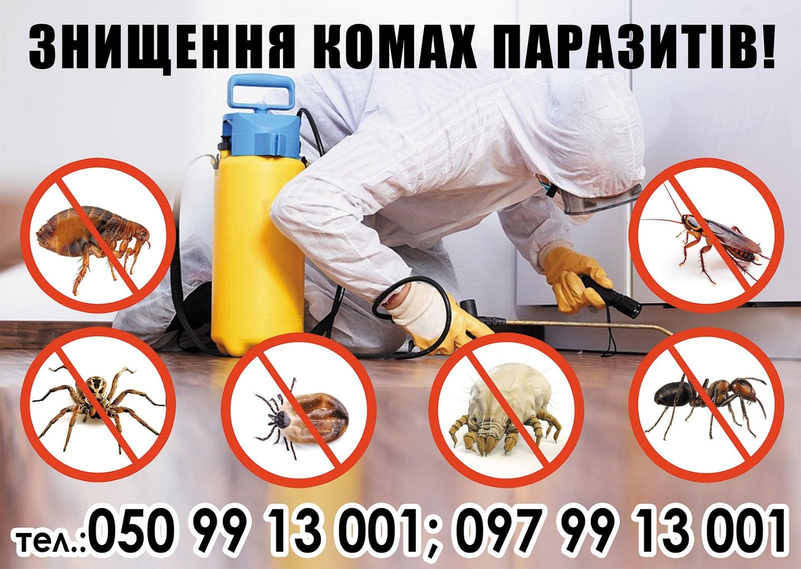 Вывести насекомых тараканов клопов